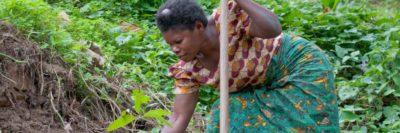 Image for Ernährung sichern – eine Farm in Afrika