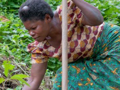 Ernährung sichern – eine Farm in Afrika