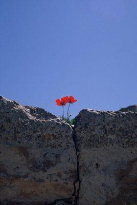 Image for Seminar: Die Kraft des Vergebens